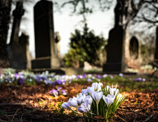 Bloom-blossom-cemetery-161280